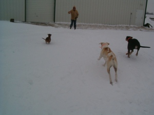 Sasha, Patches, Bear, Tom Dec 27, 2009