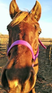 Diamond checking out the camera after our Sunday ride with Ellen Jan. 2014