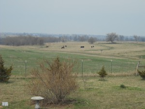 Horses out with calves April 6, 2014