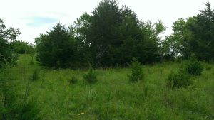 July 18, 2014 Maybe we could call our farm The Cedar Farm!  (2)