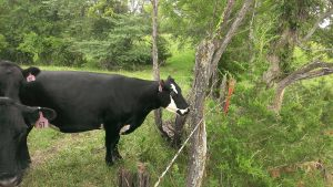 July 18, 2014 running hot wire to keep bull on our side of fence, found some other good pictures (22)