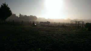 Oct. 25, 2014 Foggy morning east at the horse pen 8-57 am (2)