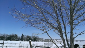 February 2, 2015 The day after the snow and wind (24)