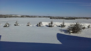 February 2, 2015 The day after the snow and wind (4)