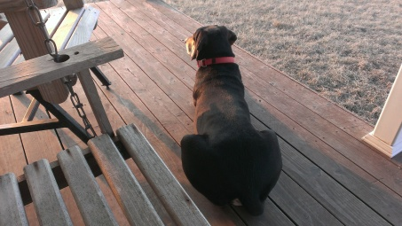 March 11, 2015 CRP fire, even Bear and Sasha watching it (1)