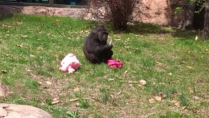Apri 5, 2015 Easter Sunday quick trip to the zoo and train ride  (15)
