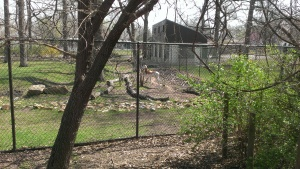 Apri 5, 2015 Easter Sunday quick trip to the zoo and train ride  (20)