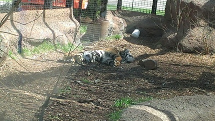 Apri 5, 2015 Easter Sunday quick trip to the zoo and train ride  (31)