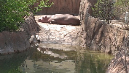 Apri 5, 2015 Easter Sunday quick trip to the zoo and train ride  (32)
