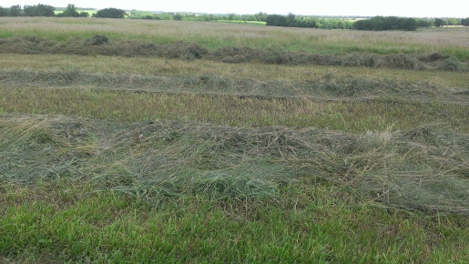 July 23-25, 2015 Finally our hay is getting mowed, raked and baled (1)