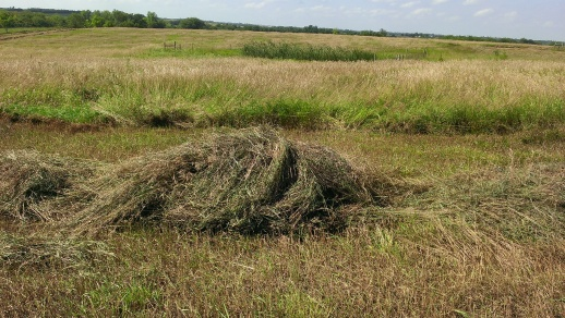 July 23-25, 2015 Finally our hay is getting mowed, raked and baled (3)
