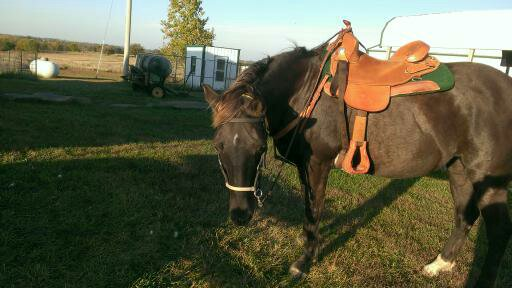 2015 October 11 Diamond ready to be unsaddled after my first ride in over a year (1)