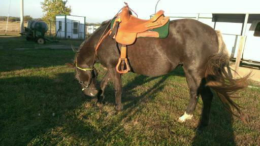2015 October 11 Diamond ready to be unsaddled after my first ride in over a year (2)