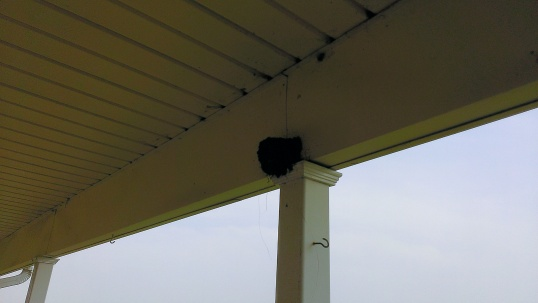 2015 June 30, The Barnswallows built a new nest