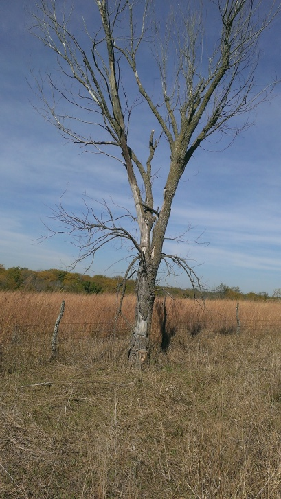 2015 October 11 Walking around the crop ground with Tom and the three dogs (1)