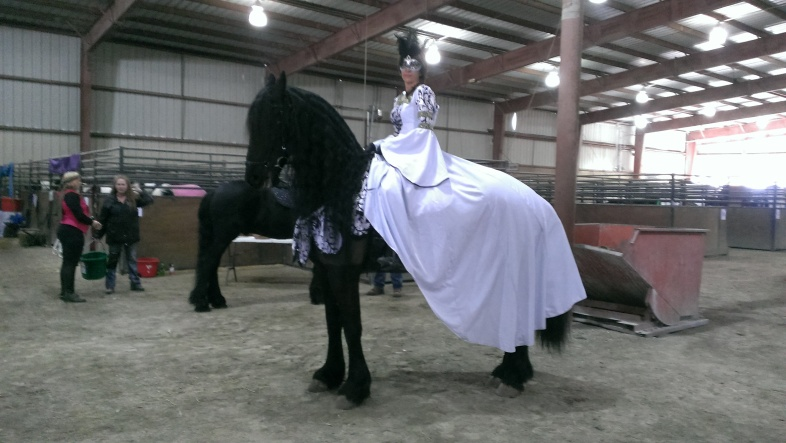 2016 February 26 and 27. Beautiful Friesian horses (4)