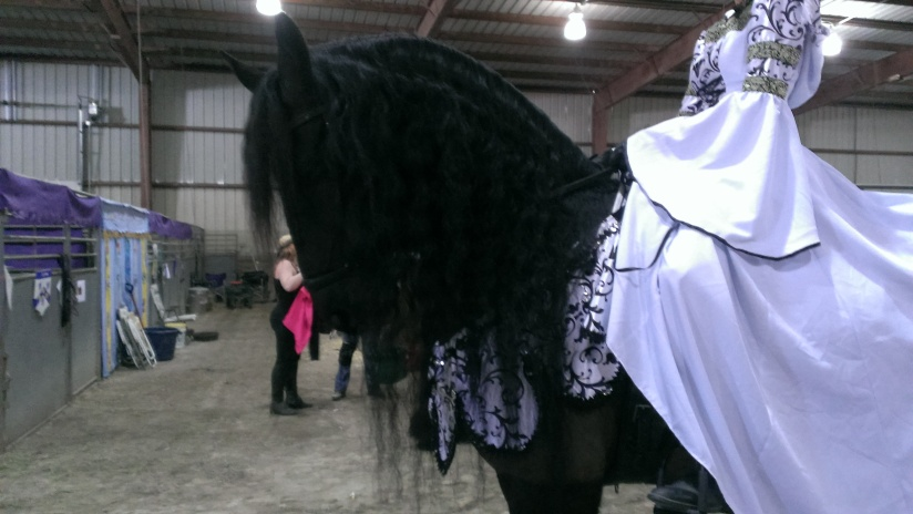 2016 February 26 and 27. Beautiful Friesian horses (5)