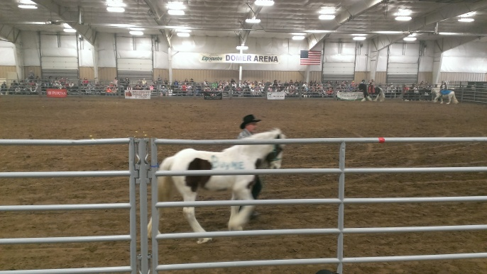 2016 February 26 and 27. Beautiful Gypsy Vanner horses (9)