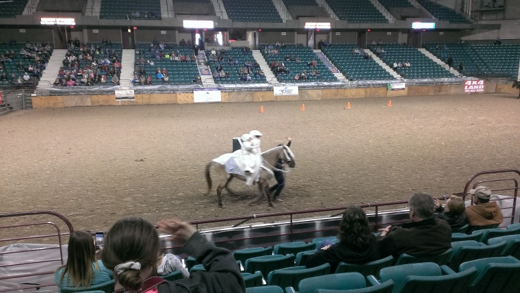2016 February 26 Equifest. First day. Rocky Mountain horses. (1)